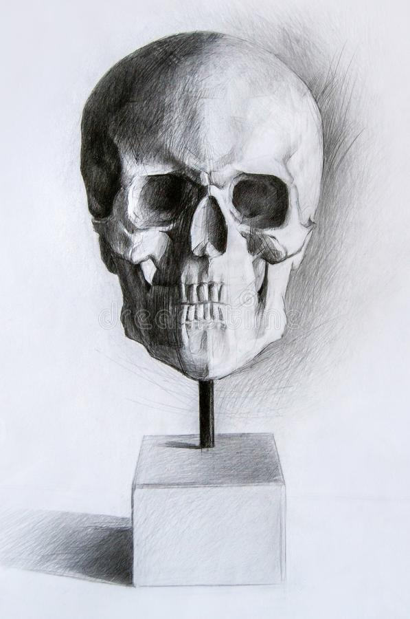 Study of a human skull - black and white pencil detailed drawing. With a white background royalty free stock photo