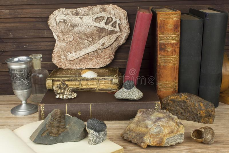The study of paleontology at the University. Preparing for an important exam. stock photos