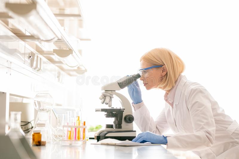Studying sample through microscope. Serious busy mature scientific researcher with blond hair standing at lab bench and studying sample through microscope stock photos