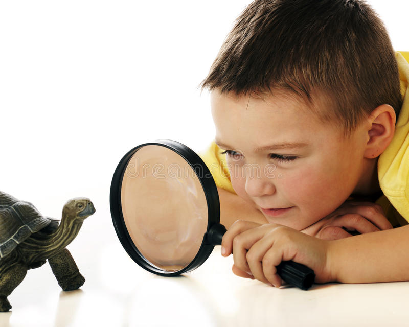 Studying the Turtle stock photography