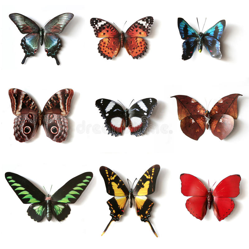 Stuffed insects Butterfly collection. Set royalty free stock image