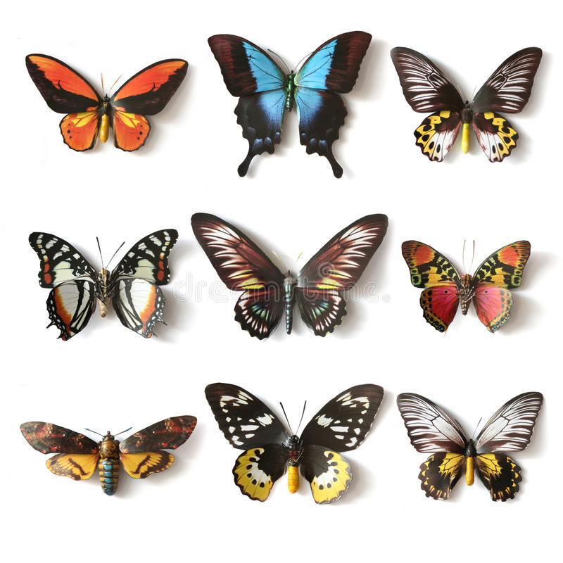Stuffed insects Butterfly collection. Set royalty free stock photography