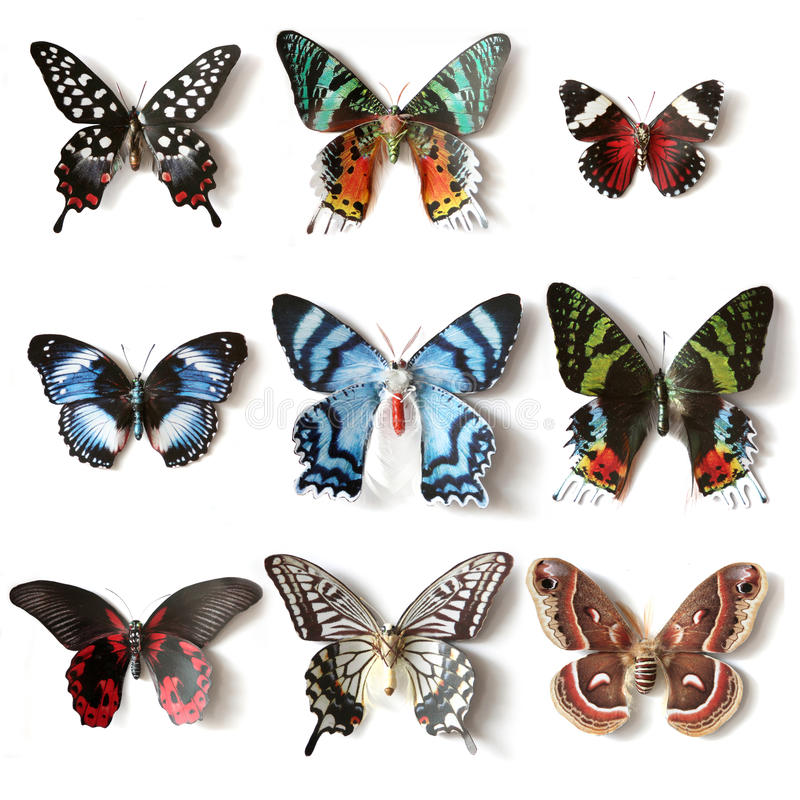 Stuffed insects Butterfly collection. Set royalty free stock photos