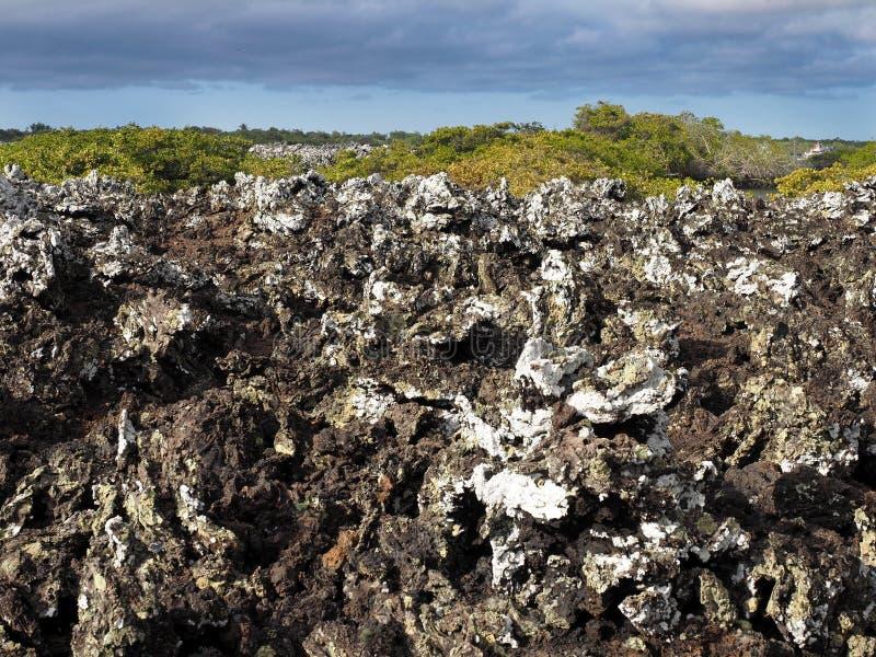 Stuffed lava on island Islote Tintoreras commemorates the moonland, Galapagos, Ecuador royalty free stock image