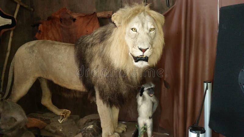Stuffed lion stock image