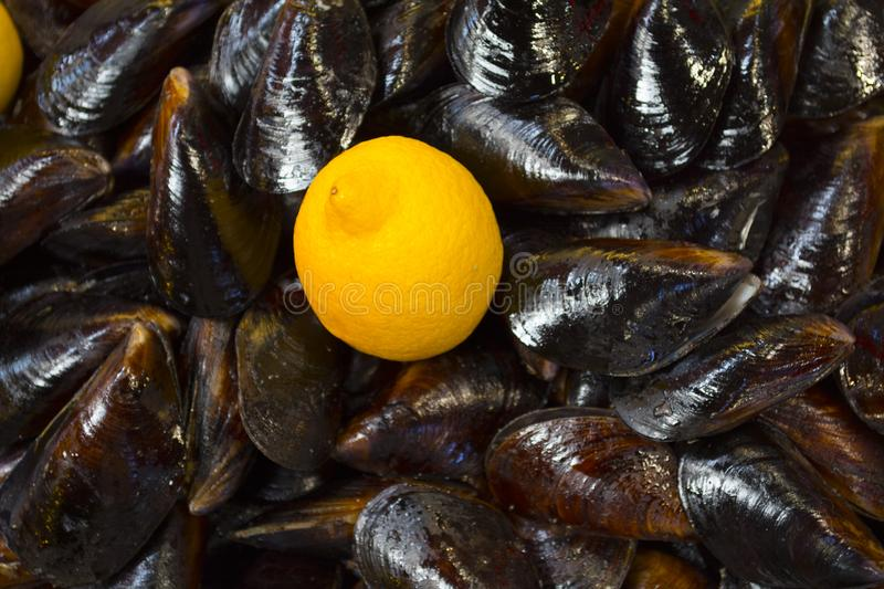 Stuffed Mussels. Midye Dolma is a kind of mediterranean cuisine royalty free stock images