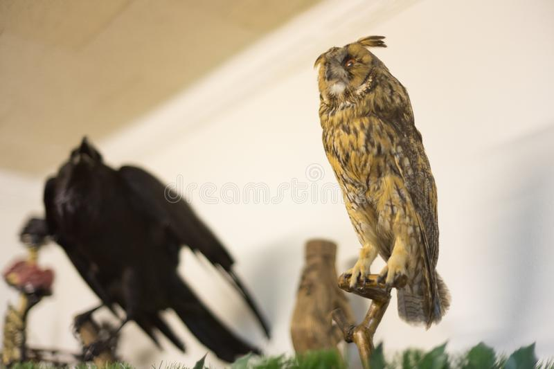 Stuffed owl and stuffed crow royalty free stock photography