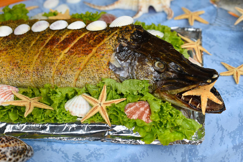 Stuffed pike royalty free stock photography