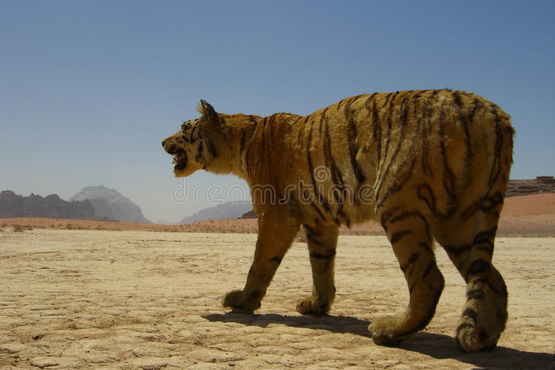 Stuffed Tiger In The Desert Stock Images
