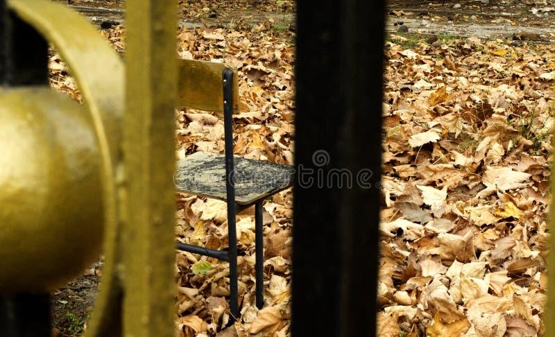 Stuhl im Herbstpark lizenzfreies stockbild
