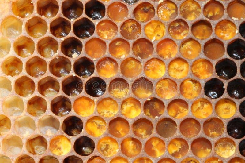 Stuifmeelkam in gebruik stock fotografie