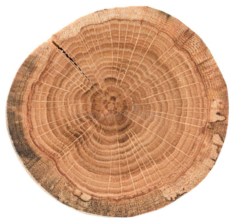 Stuk van cirkel houten dwarsdoorsnede met barsten en jaarringen De eiken die textuur van de boomplak op witte achtergrond wordt g stock afbeeldingen