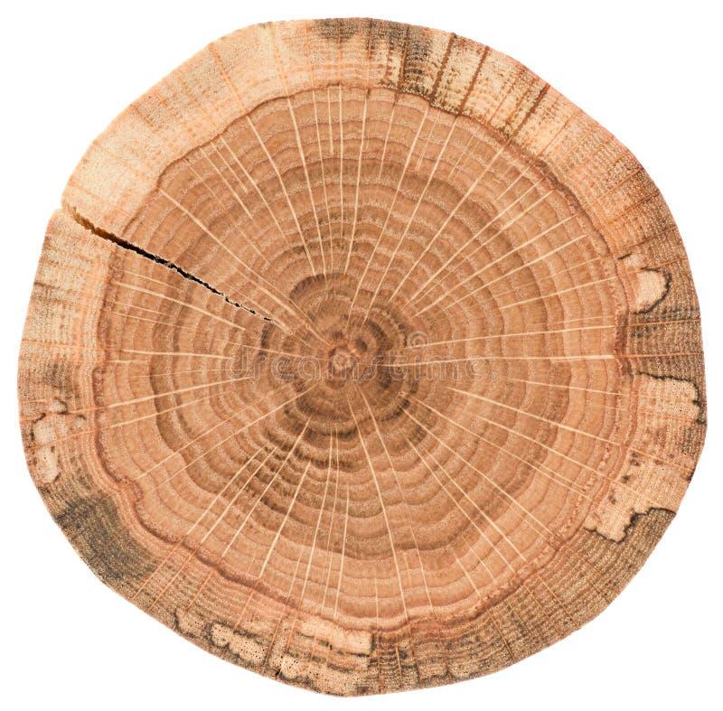 Stuk van cirkel houten stomp met barsten en de ringen van de boomgroei De eiken die textuur van de boomplak op witte achtergrond  royalty-vrije stock foto