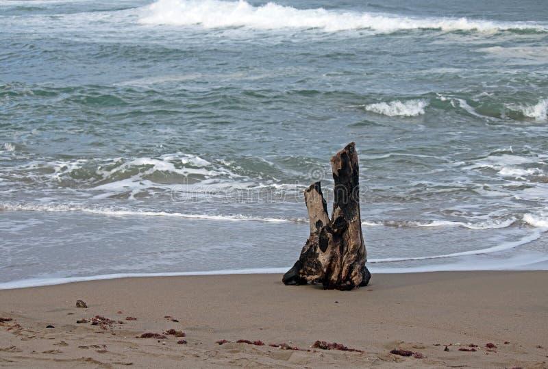 Stuk van drijfhout op het strand royalty-vrije stock afbeeldingen