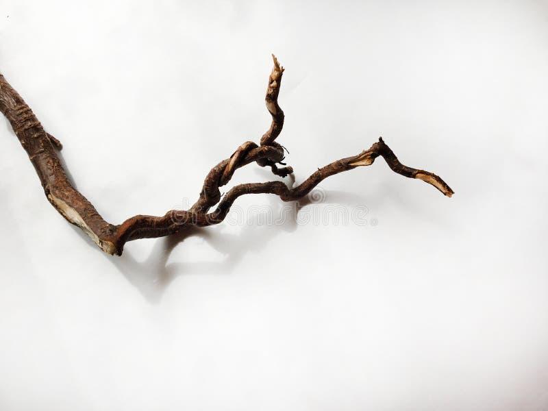 Stuk van drijfhout over witte achtergrond stock fotografie