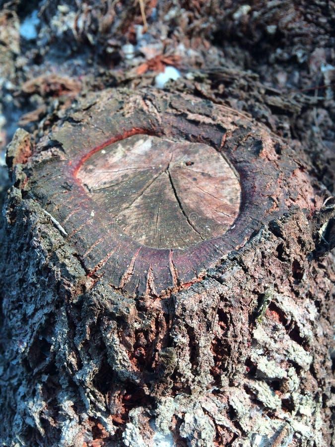Stuk van hout royalty-vrije stock afbeeldingen