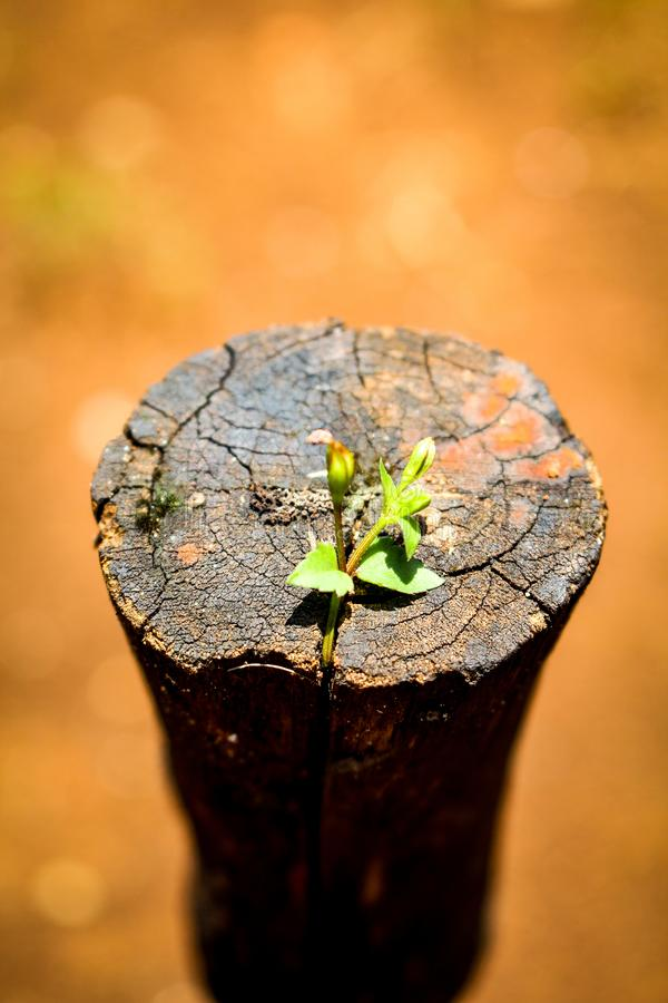 Stuk van hout op natte grond royalty-vrije stock fotografie