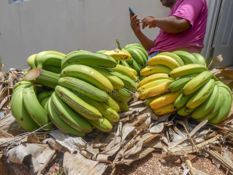 In stukken gehakte Bos van Bananen op Droog Afval royalty-vrije stock afbeelding
