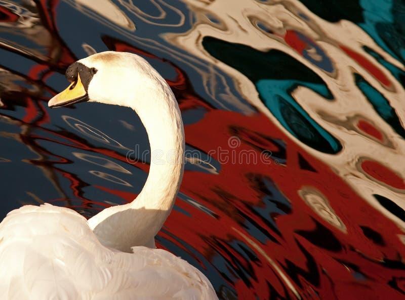 Stummer Schwan und farbige Reflexionen lizenzfreie stockbilder