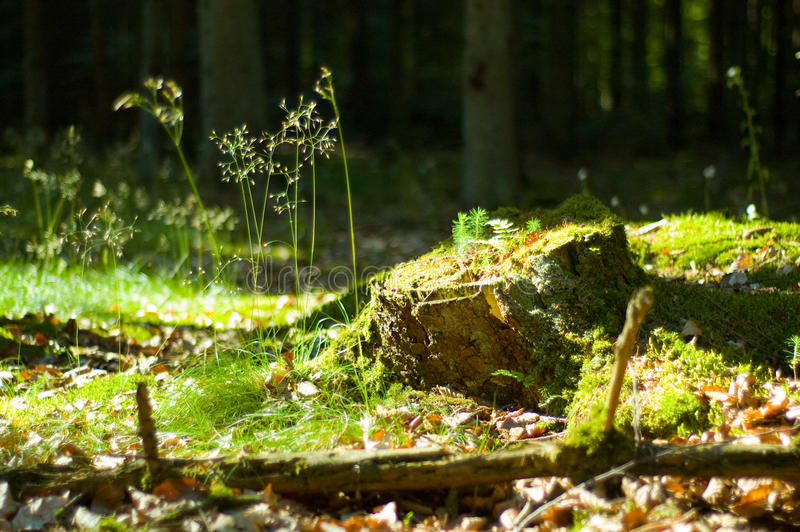 Download The stump stock image. Image of ground, cool, forest - 13193615