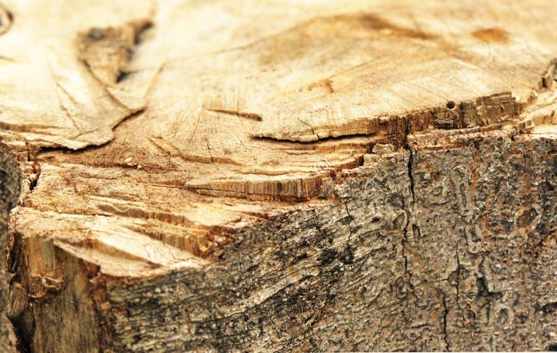 Stump. Of cutting down tree stock photo