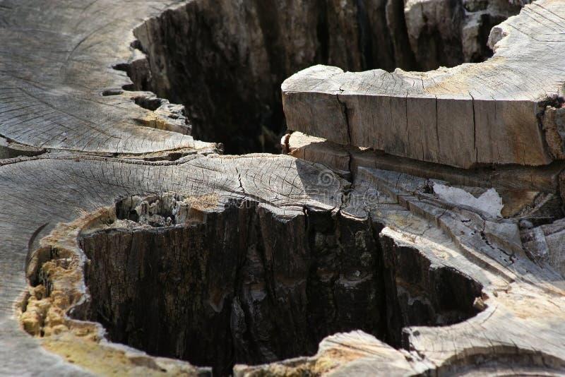 Stump stock photos
