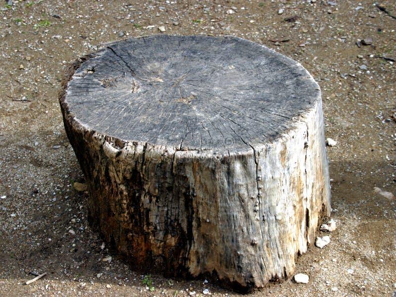 Stump stock image