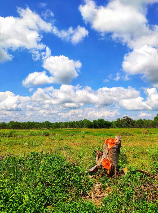 Stump, from cut trees, meadows and sky stock images