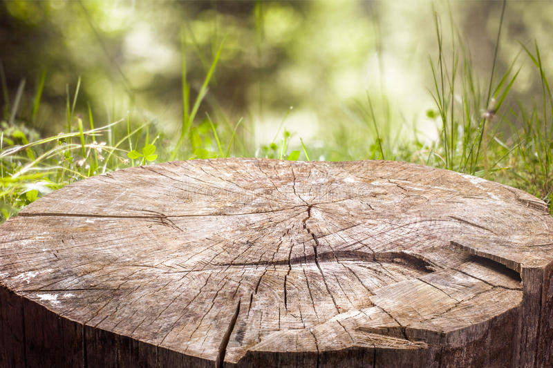 Download Stump On The Green Grass In The Forest Stock Photo - Image: 41875506