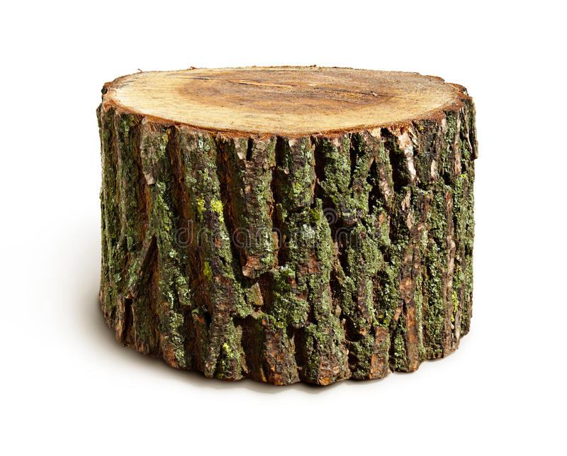 Stump isolated. On a white background royalty free stock photography