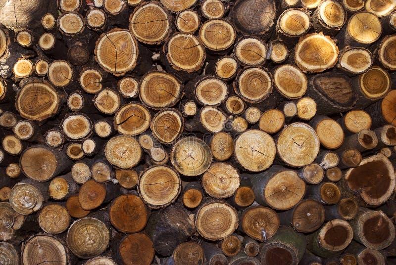 Stump log texture stock photo