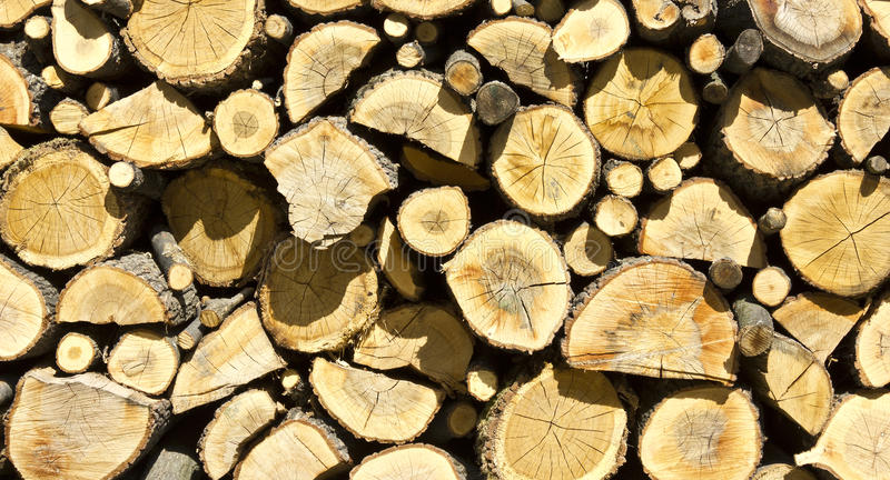 Download Stump log texture stock photo. Image of branches, pile - 20514124