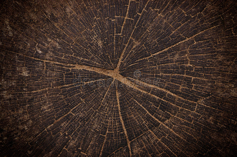 Stump of old oak tree felled stock photo