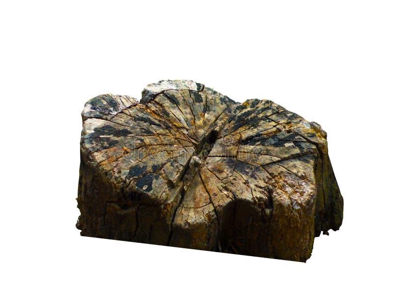 Stump stock images