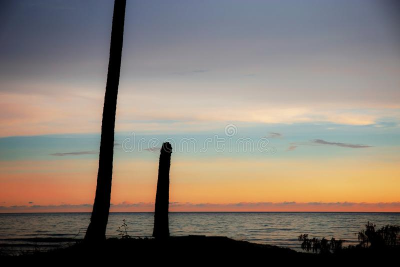 Stump palm tree at sunset stock images