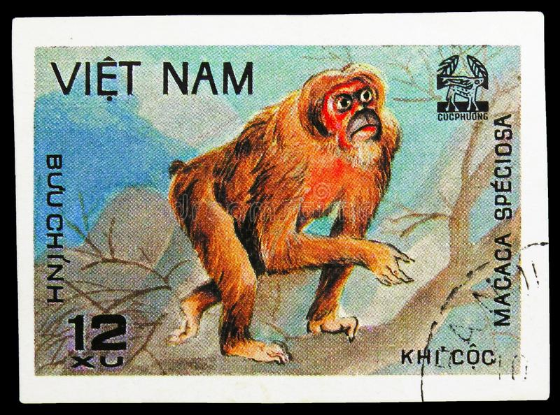 Stump-tail Macaque (Macaca speciosa), Animals from Cuc Phuona Nati Forest serie, circa 1981. MOSCOW, RUSSIA - SEPTEMBER 26, 2018: A stamp printed in Vietnam stock photo