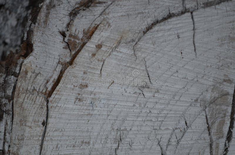 Stump tree background royalty free stock photo