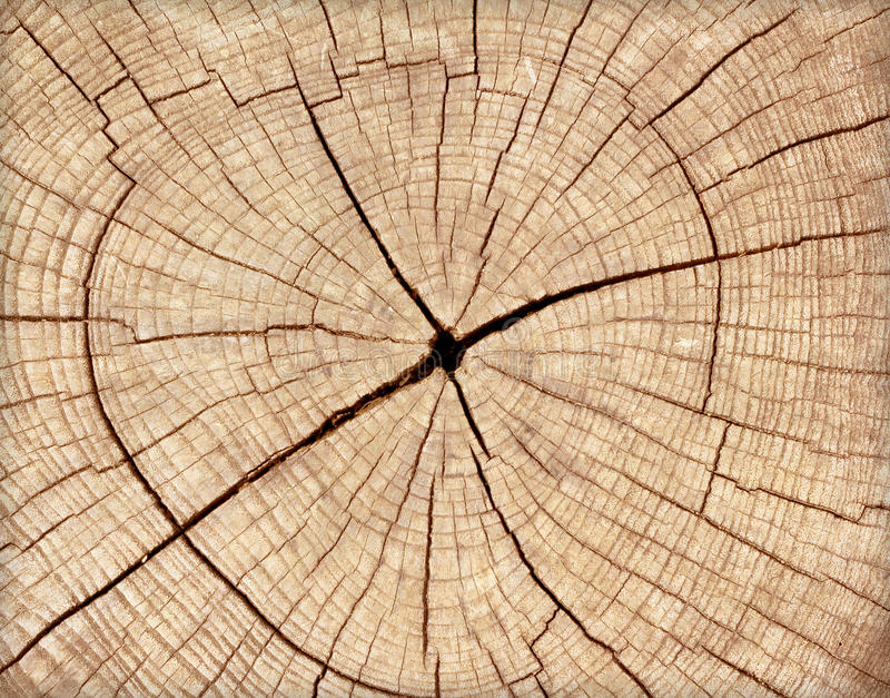 Stump of tree felled royalty free stock images