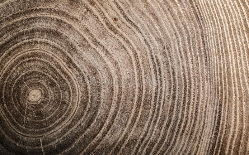 Stump of tree felled - section of the trunk with annual rings. Slice wood royalty free stock image