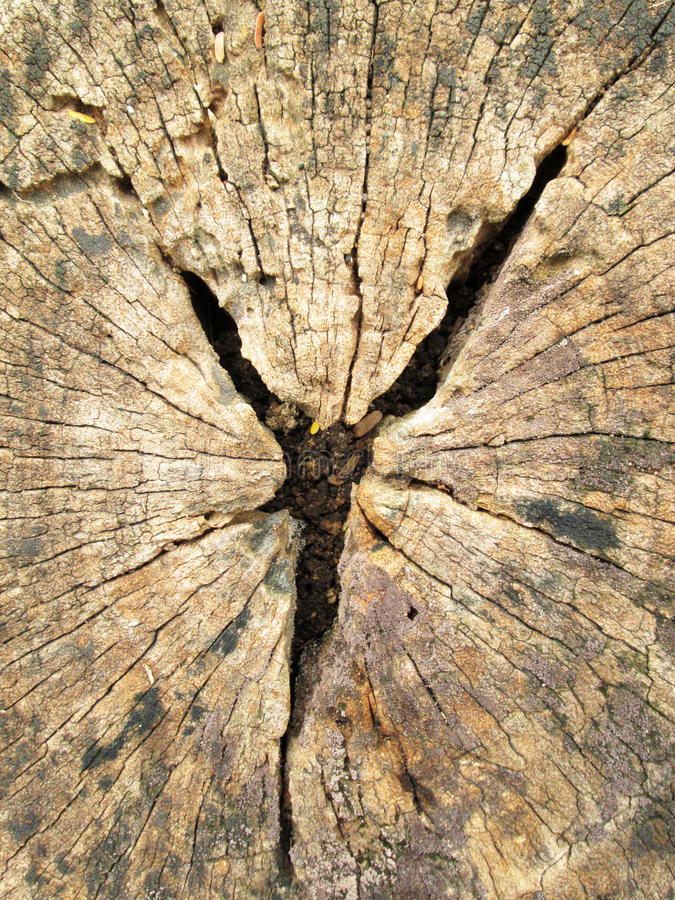 Stump weathered wood background royalty free stock photos