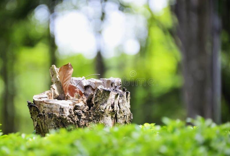 Stump stock photography