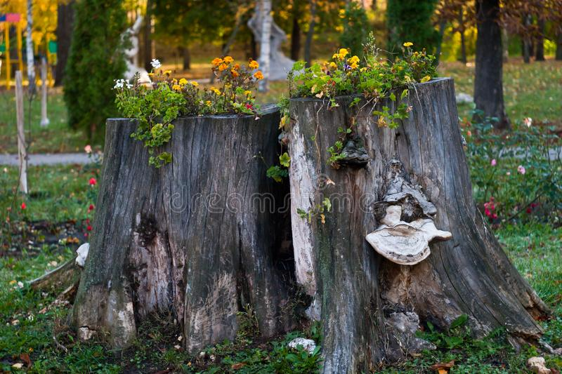Stump with flowers. stock photography