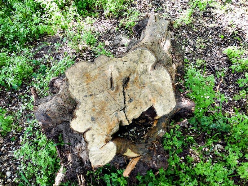 Stump woods royalty free stock photo