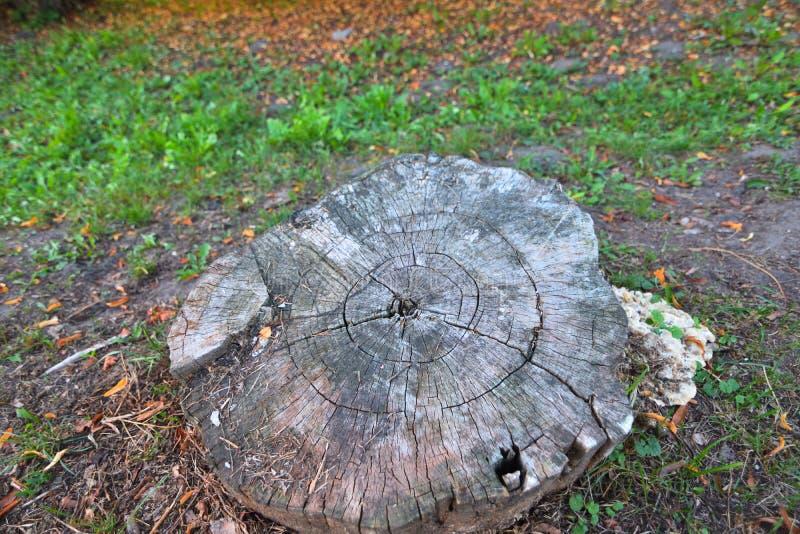 Stumpf im Herbst stockbilder