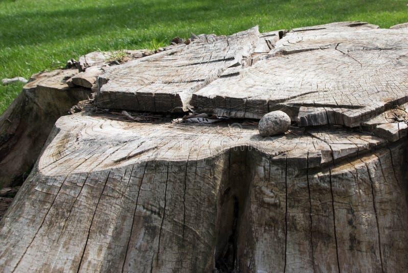 Stumpf im Park stockbilder