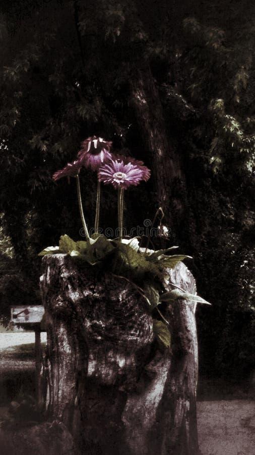 Stumpfblumen lizenzfreie stockfotografie
