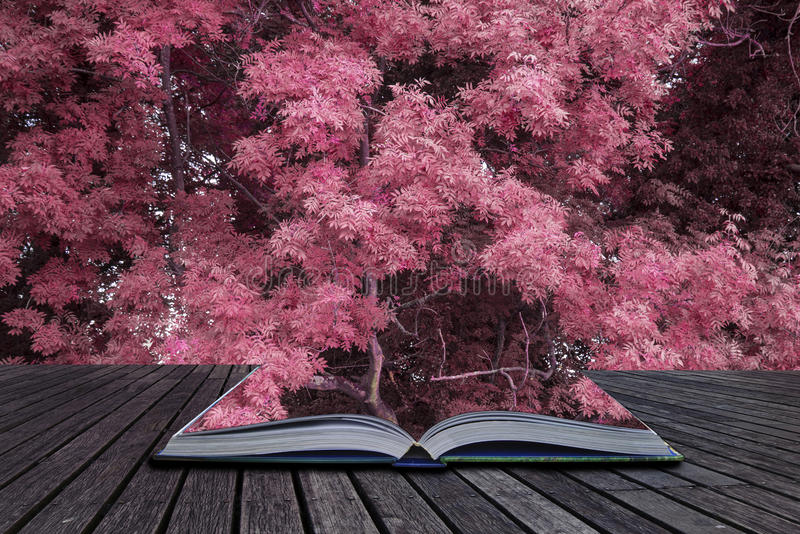 Stunning alternate vibrant colorful forest landscape tree conceptual image coming out of pages of book. Stunning alternate color forest landscape tree concept royalty free stock photos