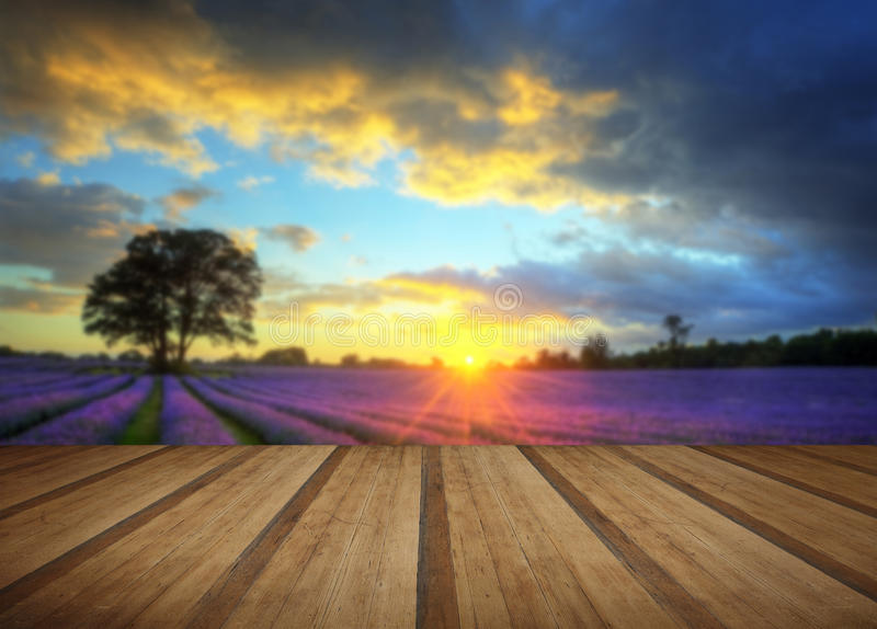 Stunning atmospheric sunset over vibrant lavender fields in Summer with wooden planks floor royalty free stock image