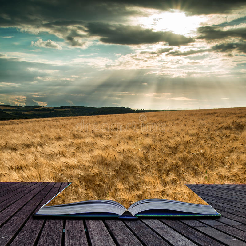 Stunning countryside landscape wheat field in Summer sunset conceptual book image stock image