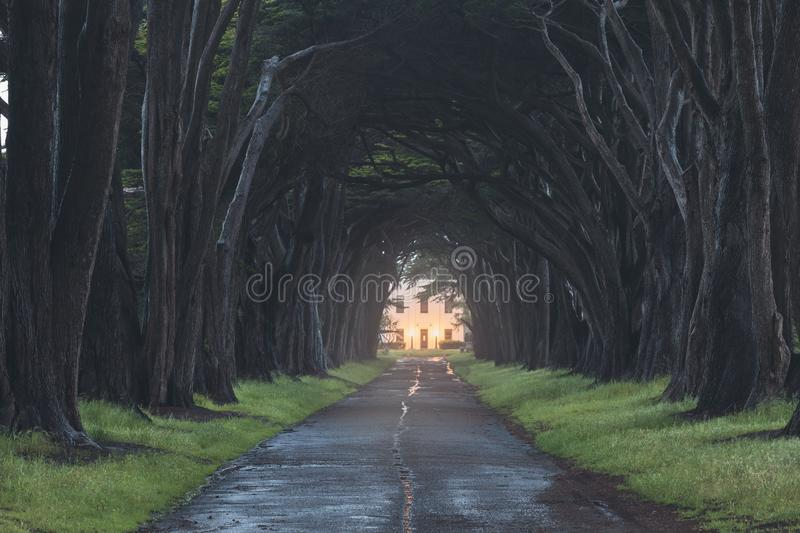 Stunning Cypress Tree Tunnel at Point Reyes National Seashore, California, United States. Fairytale trees in the beautiful day. Near San Francisco, USA royalty free stock photos